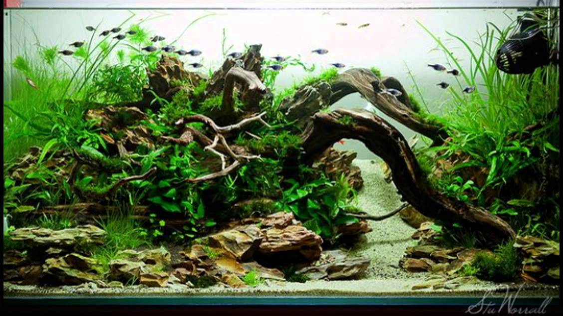 Beautiful Nature Aquascape Style Part #2