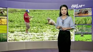 VTC14 | Thời tiết nông vụ 19/10/2017 | Sau mỗi đợt mưa, dịch lở mồm long móng gia tăng