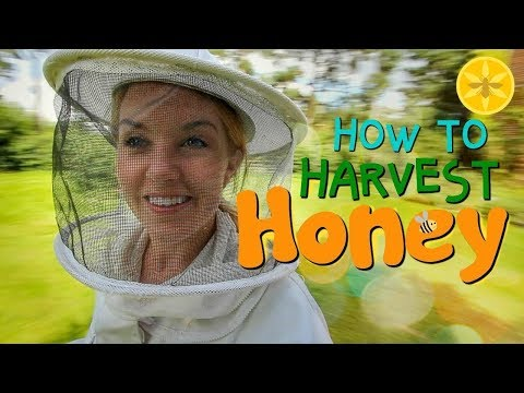 How to Harvest Honey! | Beekeeping with Maddie #12