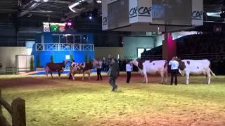 Salon de l'agriculture 2014 Prix spéciaux : championnat adulte