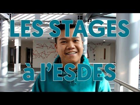 Les stages à l'ESDES - témoignages d'étudiants