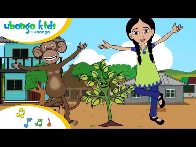 Photosynthesis, Photosynthesis Song | Singalong with the Ubongo Kids | African Educational Cartoons