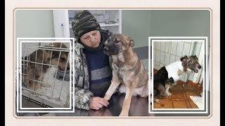 Не можем не лечить. Помогите спасти лохматиков. We can't get past the injured animals.