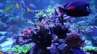 Large Reef Tank by Rainbow Reef