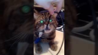 Что у кота в пасти о_О