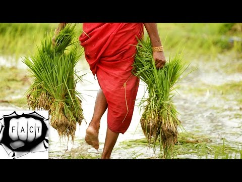 Top 10 Rice Producing Countries In The World