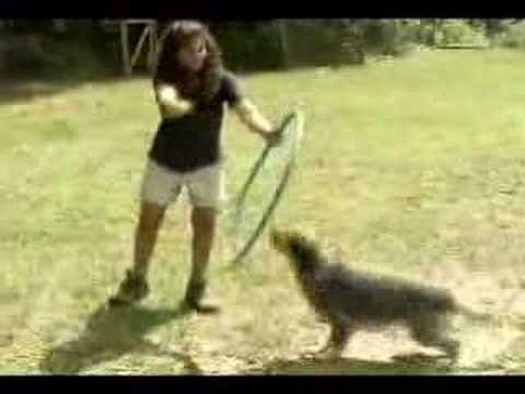 Camp Good Dog Maple Ridge