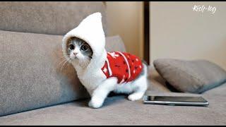 소설이가 태어난 캐터리 방문 & 크리스마스 맞이하기 - #새끼고양이 소설이 육묘일기 (12)