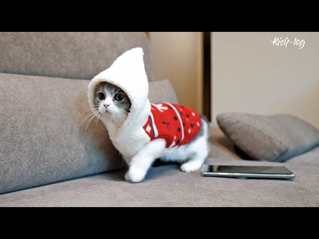 소설이가 태어난 캐터리 방문 & 크리스마스 맞이하기 - 새끼고양이 소설이 육묘일기 (12)