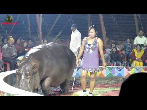 HIPPO AT AFRICAN FAMOUS CIRCUS KOLKATA AT WINTER | हिप्पो अफ