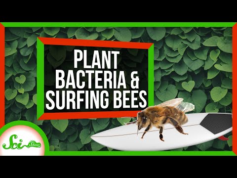 How Bacteria Helped Plants Take Over the World | SciShow News
