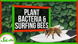 SciShow: How Bateria Helped Plants Take Over the World thumbnail
