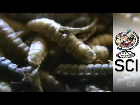 How Maggots Are Helping Fight World Hunger