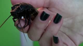 насекомые,рептилии--живой уголок