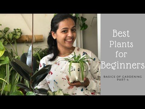 Best Indoor Plants For Beginners   Garden Vibes