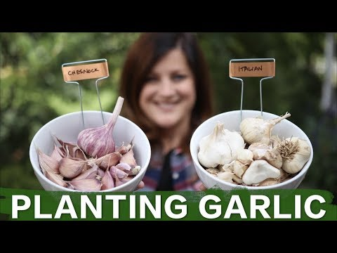 Planting Garlic // Garden Answer