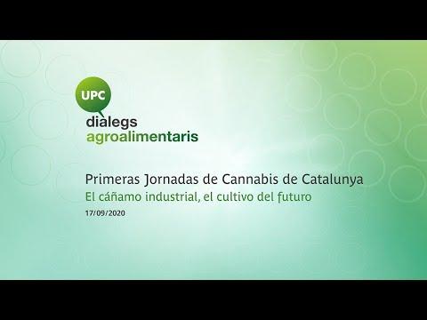 UPC Diàlegs: I Jornada de Cannabis de Catalunya