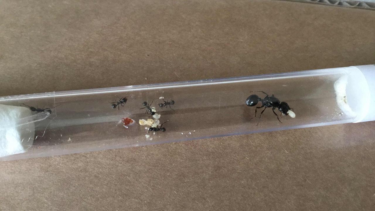 5 Grunde Ameisen Im Antstore Zu Kaufen Youtube