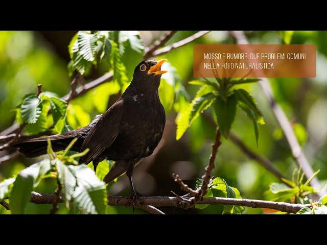 Mosso e rumore: due problemi comuni nella foto naturalistica