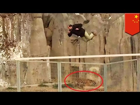 Chinese man jumps into tiger enclosure from chairlift at Henan zoo for