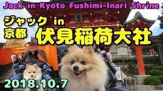 2018年10月7日、愛犬ジャックと京都の伏見稲荷大社に行ってきました。2...