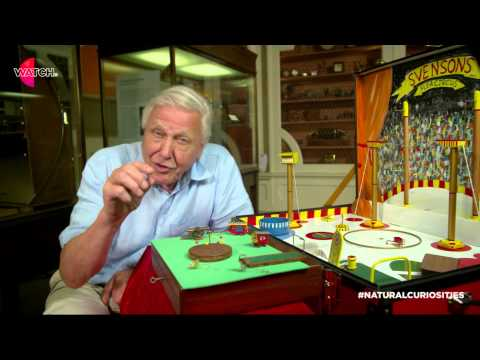 Watch | David Attenborough's Natural Curiosities: The Flea Circus