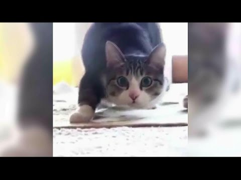 Funny cats compilation 1 Забавные коты!