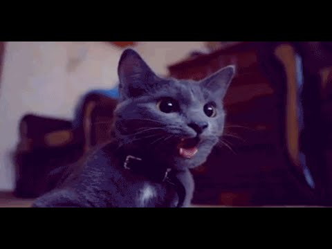 Best of Cats in 2 Minutes - Funny cats compilation