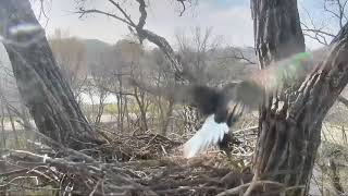 Decorah Eagles Dad Crashes Into Tree Trunk,Trying 2 Catch Squirrel & Slow-Motion 11
