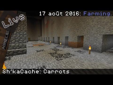 Sh'kaCache: Carrots - 17 août 2016.