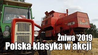Żniwa 2019 – Bizon Rekord i Ursusy czyli polska klasyka w akcji