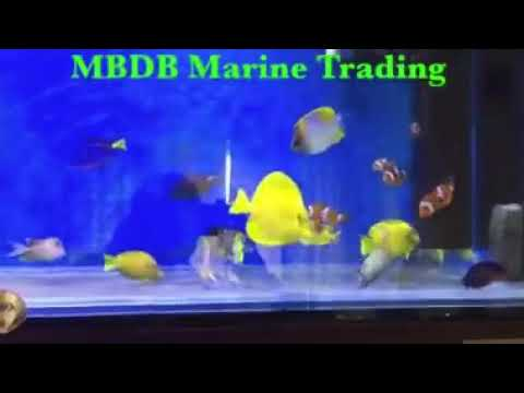 Marine Fish Exporter