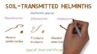 Helminths helminthiases megelőzi őket. Helminths alvók - Gazdaszervezet változás paraziták