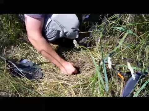 Jetty Island Soil Sampling