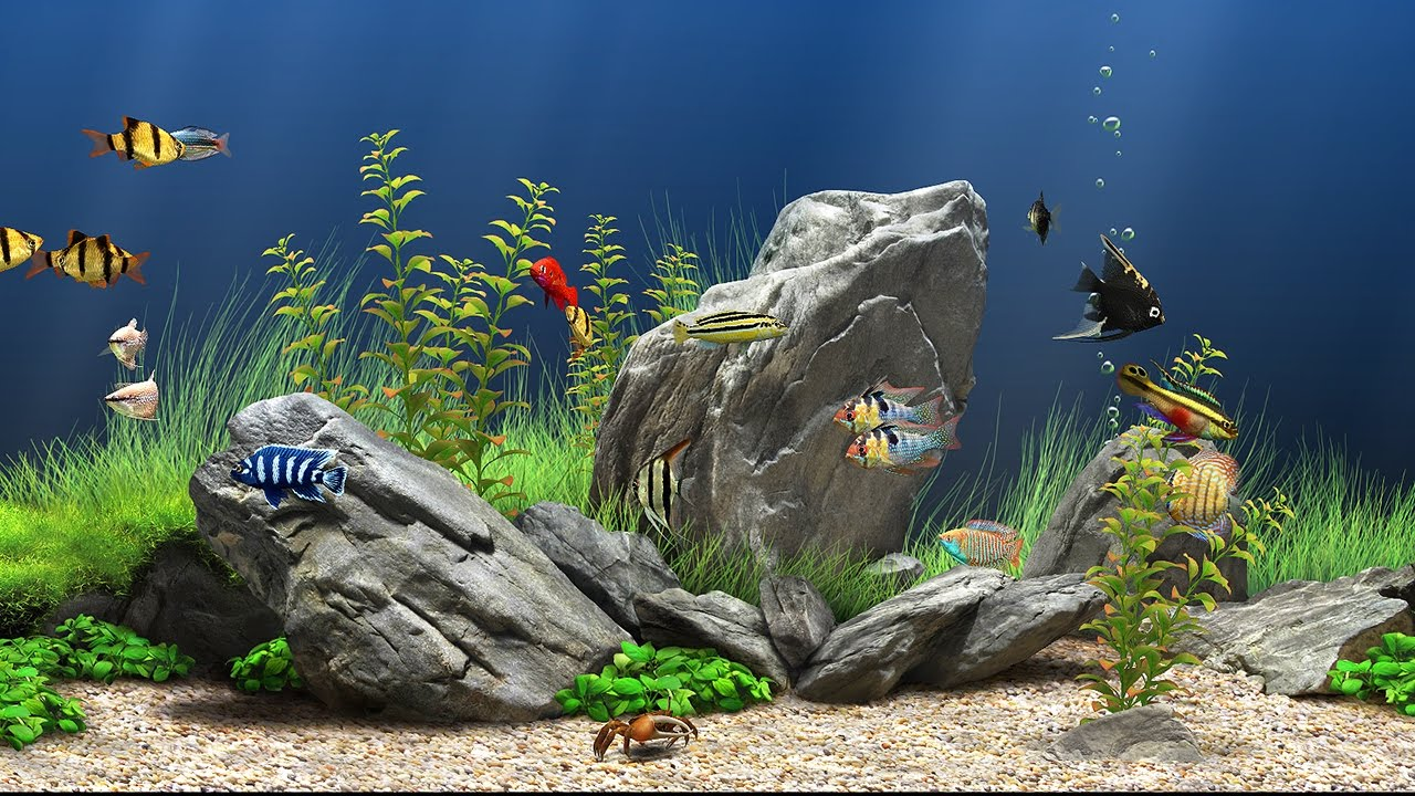 screensaver windows 7 acquario