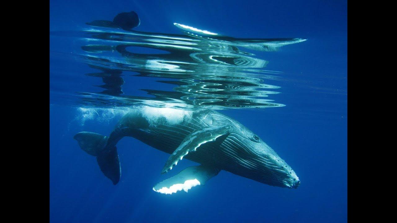 Sydney Recording Studio Whale Song