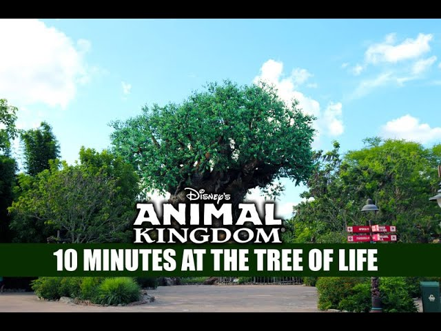 Disney's Animal Kingdom 10 Minutes at the Tree of Life at Closing - Walt Disney World Crowds