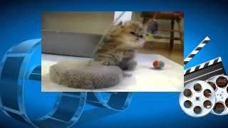 Котенок играет. Смешные коты. Funny Cat Videos