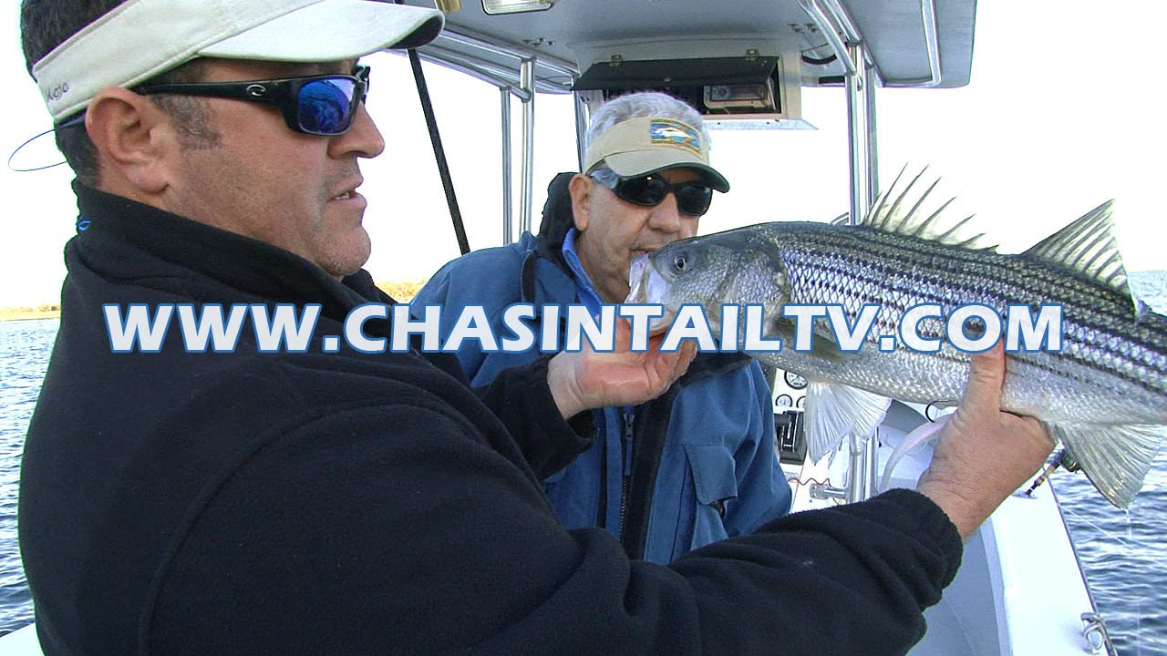 Striped bass fishing bridges using soft plastics chasin for Chasing tails fishing report