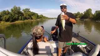 Sacramento River American Shad Fishing June 2013