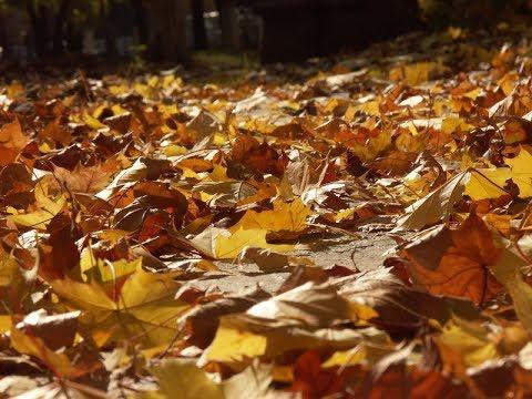 ASMR ♫ Leaves rustling - sound effect ♫