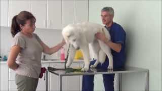 com acostumar al teu gos a anar al veterinari clnica veteralia espai veterinari
