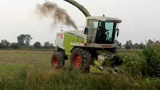 Wielkie koszenie Kukurydzy|2 Sieczkarnie|9 ciągników