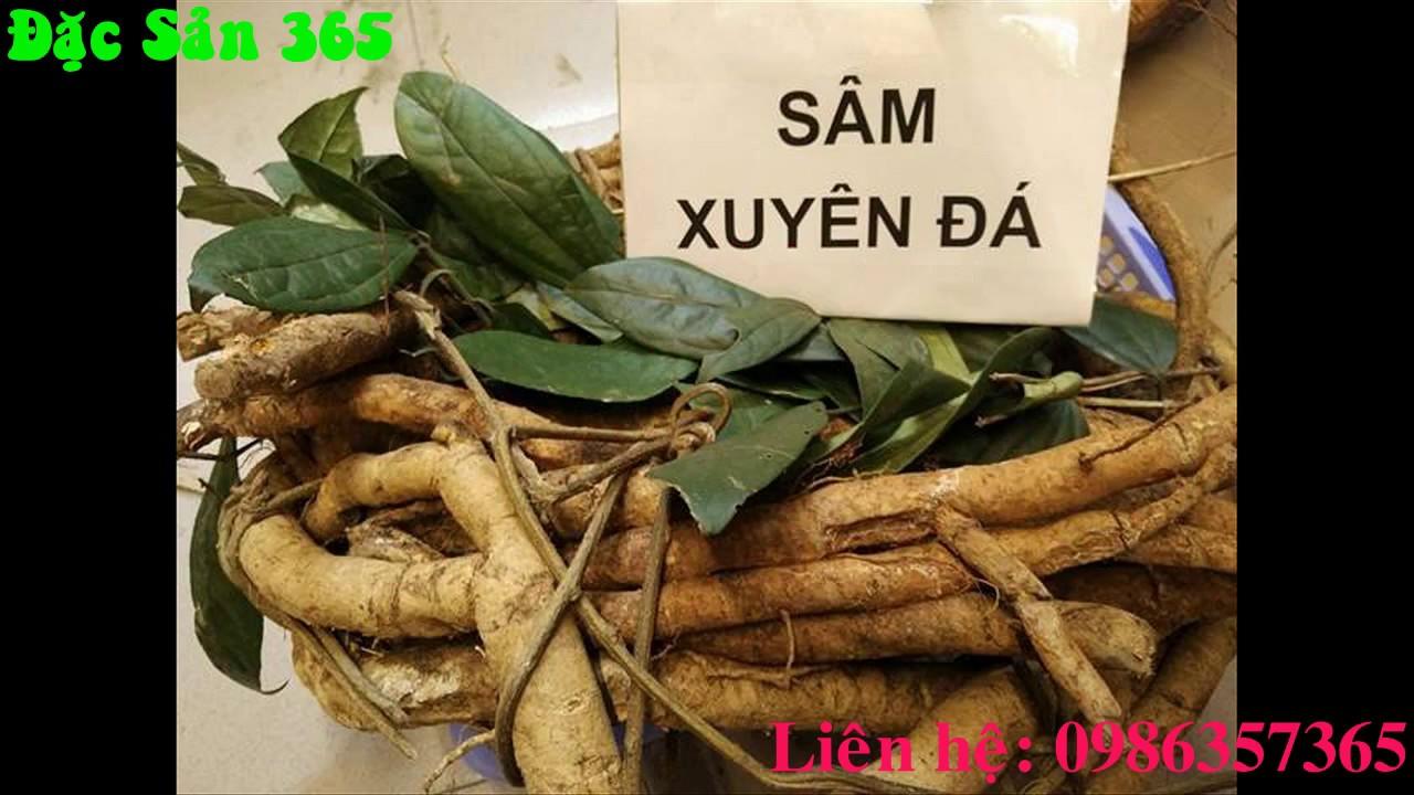 Cách Nhận Biết Sâm Đá ( Sâm Xuyên Đá ) Chuẩn Rừng Hà Giang-0986357365