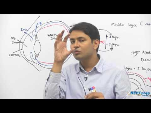 Parts of Eye - Neural Control & Coordination - Dr. Rajeev Ranjan | NEET AIIMS | Video Lectures
