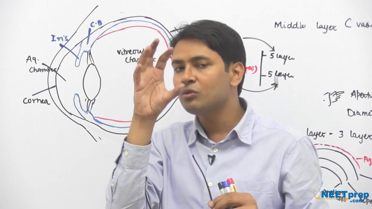 💄 Dr najeeb ophthalmology lectures torrent   Dr  Najeeb
