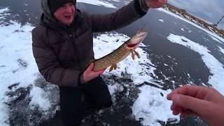 Жерлицы. Первый лед. Зимняя рыбалка на щуку.Зимняя рыбалка.Ловля на балансир.Рыбалка на мормышку.