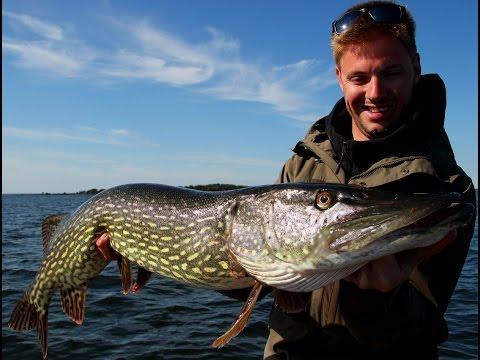 Vissen op snoek in Zweden bij Sportfishing Dalsland 2016
