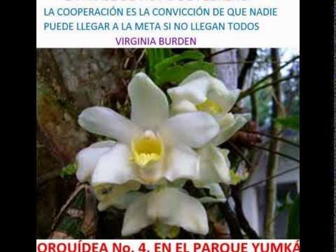 ORQUIDEAS DE TABASCO CON FRASES CELEBRES