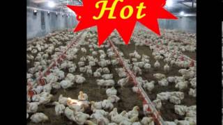 chicken farm poultry farm design broiler equipment feeder and nipple drinker manufacturer China